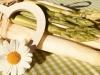 Lieblingsgemüse Spargel von Schäfer